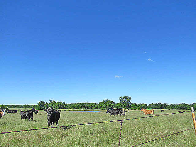 cows, ranches, cattle, ponds, lakes, hunting, land, ranches, SE oklahoma ranches